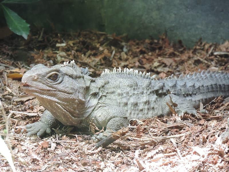 A Short Overview of Reptiles