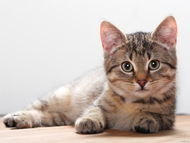 How to locate Good Homes For Kittens
