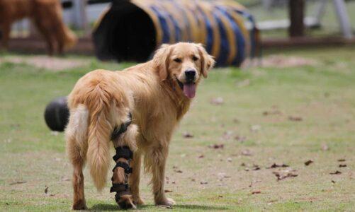 How Do Dog Splints Work?