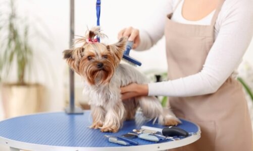 Here's How You Can Take Care Of Your Pet During Monsoon Season