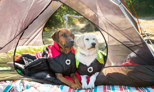 Essentials Dog Gears for Outdoor Adventure