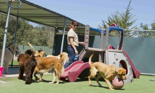 Important Tips For Choosing The Right Dog Boarding Facility