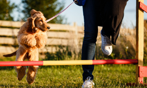 What Is The Difference Between Dog Training And A Dog Behaviorist?