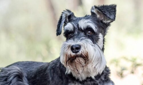 Understanding the Smartest Choices for the hypoallergenic dogs