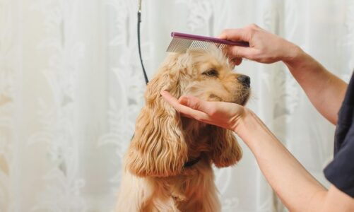 The Biggest Lie About Dog Grooming Supplies