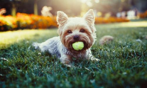 Do dogs enjoy doggy daycare?