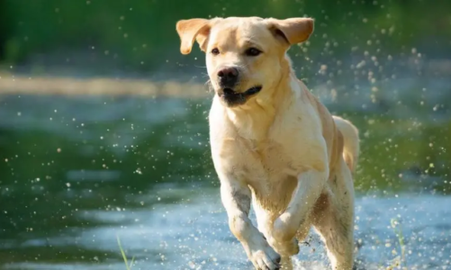 What Are the Most Playful Dog Breeds?
