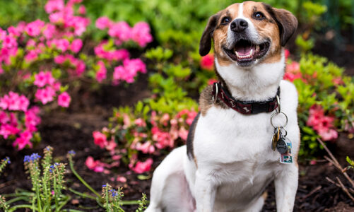 Is Your Dog Safe in the Springtime?