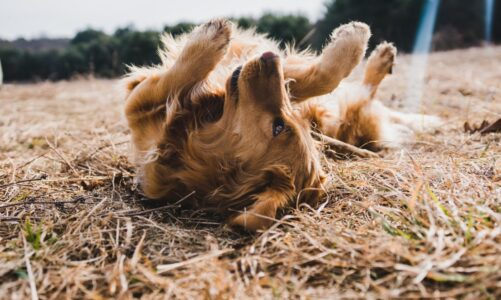 How To Start A Dog Walking Business Website?
