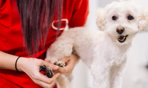 Why you should trim your dog's nails – Collar & Harness