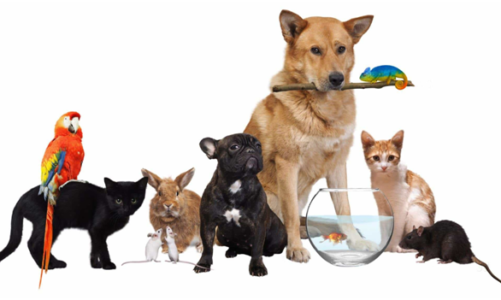 The easy method to settle an open Pet Store