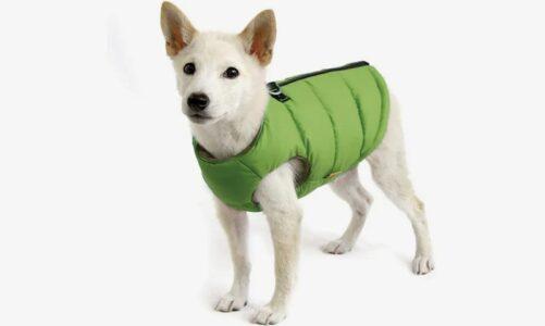 Best Dog Coats Your Dog Deserves Now
