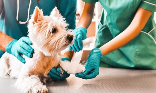 How A Vet Emergency Can Provide Complete Care