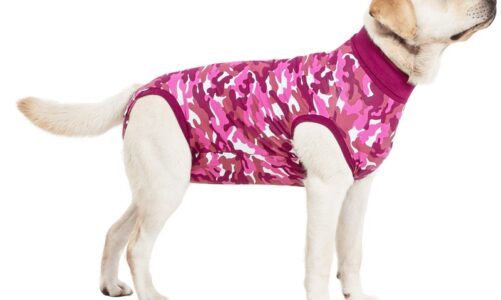 What is a recovery suit used for the pets?
