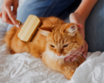 How do you take care of your cat?