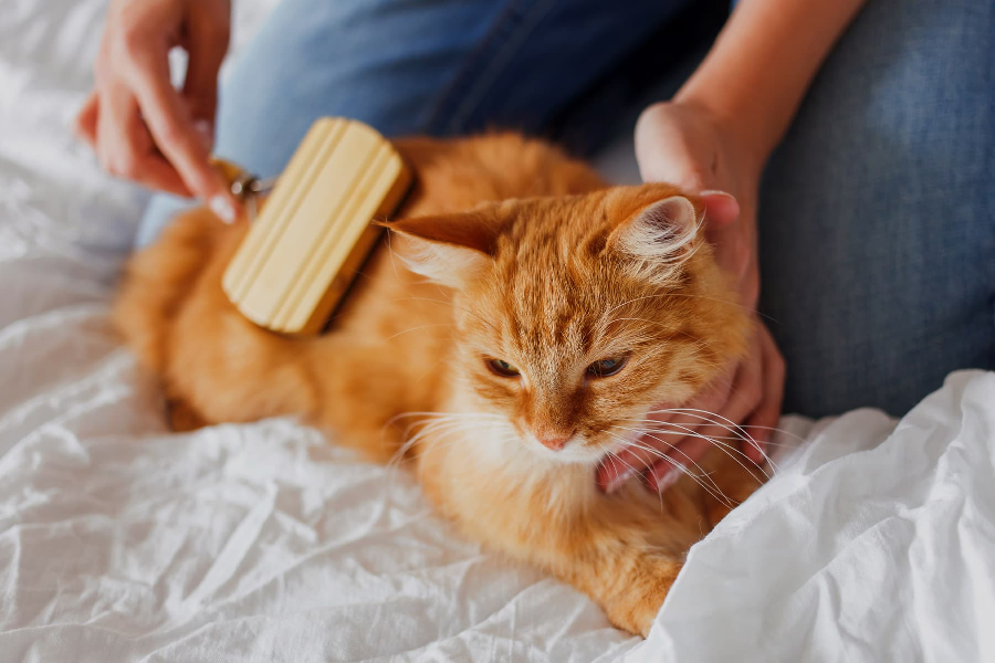 Hygiene tips for your kitten
