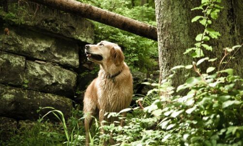 Advantages of Using Eco-friendly Green Pet Products You Should Know About