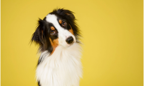 Main Reasons Why Your Dog Needs a DNA Breed Test